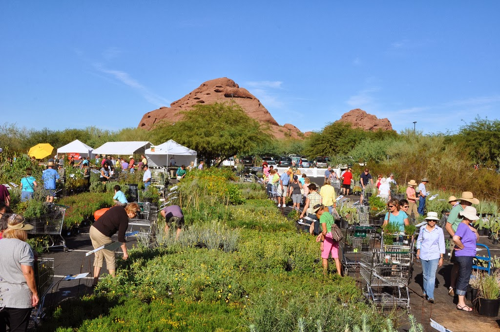 Spring Plant Sale at Desert Botanical Gardens